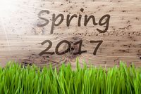 Bright Sunny Wooden Background, Gras, Text Spring 2017