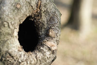 knothole in a tree trunk
