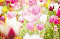 Blume des Lebens als Esoterik Symbol