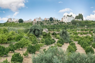 Orchard (lime, lemon, orange)