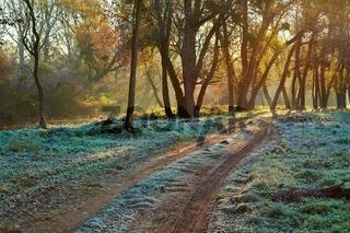 Autumn morning landscape