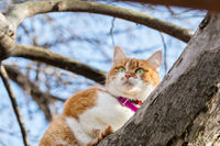 Cut funny white-and-red on the tree. Shallow depth of field, green cat eyes in the focus. Beautiful early spring day.