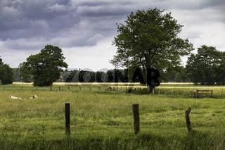 Weidelandschaft im Münsterland, NRW