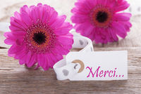 Pink Spring Gerbera, Label, Merci Means Thank You