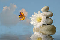white blossom with stone pyramid and butterfly