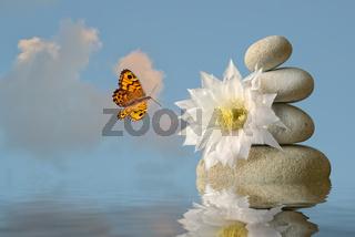 weiße Blüte mit Steinpyramide und Schmetterling