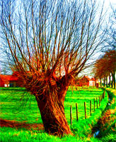 colorful painting style photo of pollard willow tree