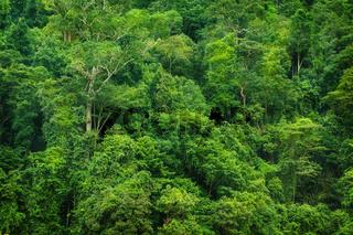 Tropical rainforest view