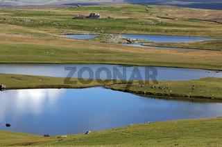 Landscape with lakes, Western Mainland, Shetland Islands, Scotland