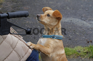 kleiner Hund bettelt