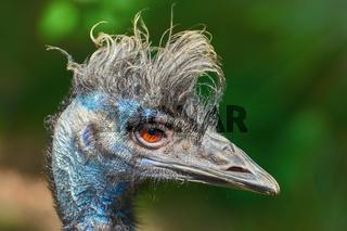 Portrait of Emu