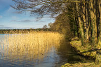 A lake in the nature reserve in winter with sunshine and blue sky