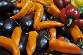 Verschiedene Sorten Paprika und Auberginen