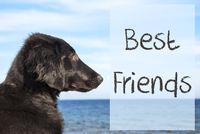 Dog At Ocean, Text Best Friends