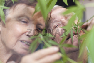 Happy senior couple smelling Cannabis plant