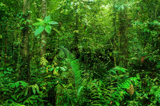Fantastic tropical rainforest
