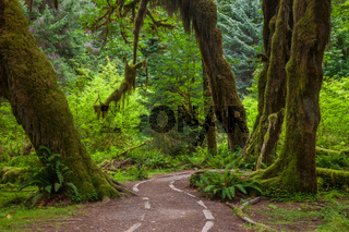 A trail through the Hoh Rainforest in Olympic National Park, Washington