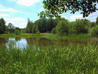 Fishing pond with reeds Plothen