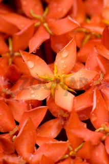 a drop water on flower