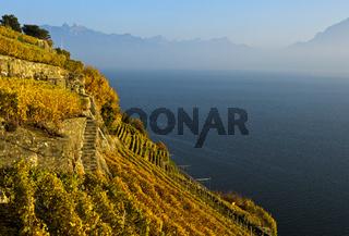 Terrassierte Steillagen im Weinanbaugebiet Lavaux über dem Genfersee, Lavaux, Waadt, Schweiz