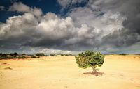 pine tree on sand over cloudy sky