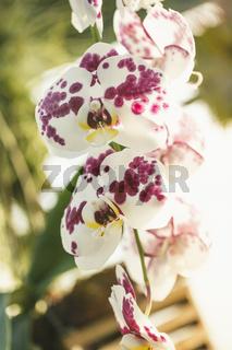 Nahaufnahme einer Orchideenblüte