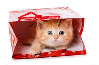 Kätzchen in Geschenktüte