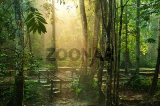 Beautiful tropical park