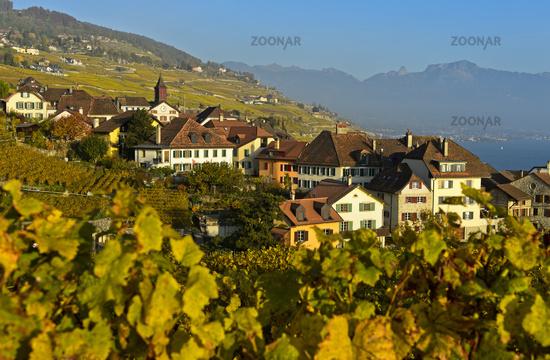 Wine-growing village of Rivaz in the Lavaux vineyards, Vaud, Switzerland