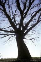 Grosser alter Baum