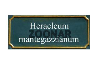 schild Herkuleskrautige Pflanze,Heracleum mantegazzianum