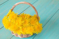 Wicker basket with yellow sow-thistles
