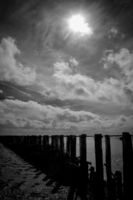 wooden breakwater in the Wadden Sea, UNESCO World Heritage Site