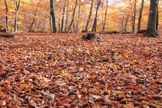 Waldboden bedeckt mit Herbstblättern
