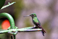 hummingbird in the jungle