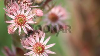 Cactus Flower Background