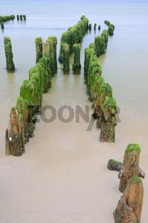 Algenbewachsene Buhnen am frühen Morgen am Strand von Rantum,  S