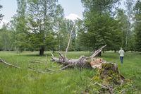 historic woodland pasture nearby Waldenburg, Germany
