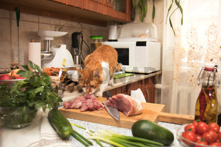 Cute red cat stealing meat from the kitchen table. Small cozy kitchen with household appliances. Cozy home concept