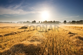 Beautiful late summer stubble field at sunrise. Morning landscape