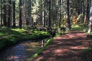 zauberwald bei bernau im suedschwarzwald