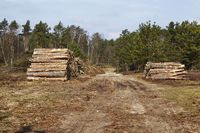Forestry - wood stacks