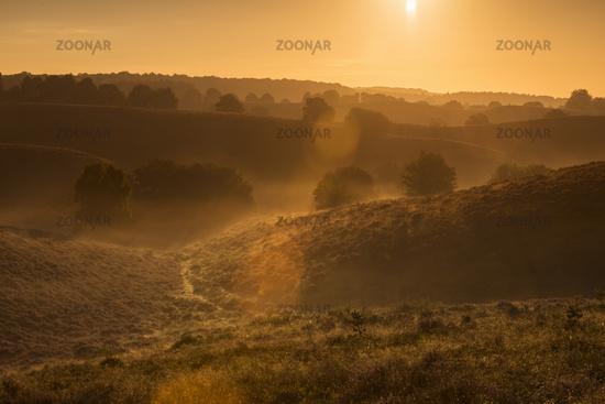 endless hills... Sunrise above the Veluwe *Netherlands*
