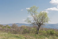Landscape in Central  Istria