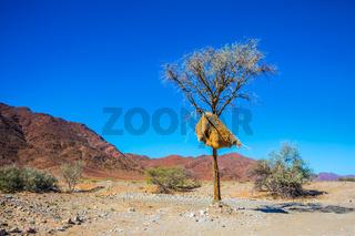 Red Namib desert in Namibia