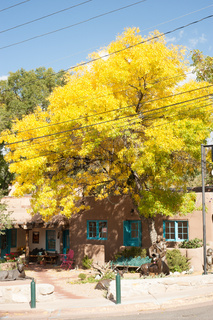 Yellow leaves on tree on Canyon Road in the fall in Santa Fe, New Mexico.