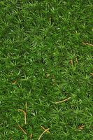 Moss surface as background texture