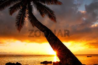 Leaning palm tree at sunrise in Lavena village on Taveuni Island, Fiji