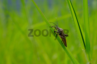 Stink bug resting on grass