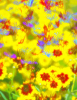 impressionism abstraction of very bright flowers in garden or meadow